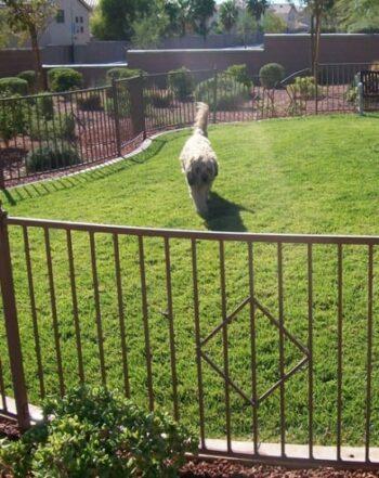 Custom Pet Fence LV