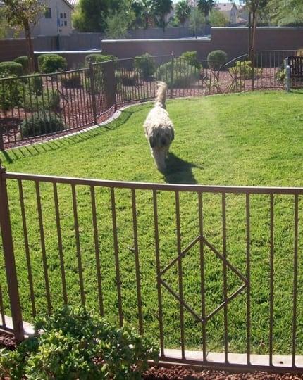 Custom Pet Fence LV Wrought Iron Design In Las Vegas